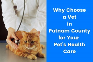 Why-Choose-a-Vet-in-Putnam-County-for-Your-Pets-Health-Care